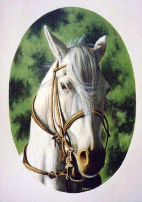 Cavallo bianco 50x70 2002.jpg