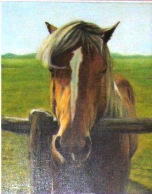 Cavallo dietro lo steccato 40x50 1982.jpg